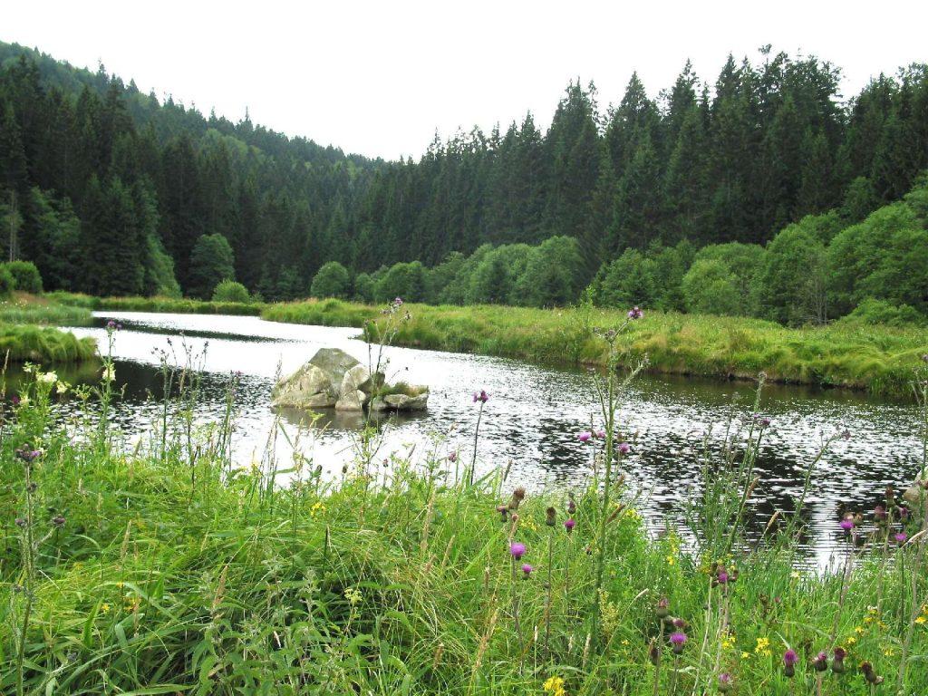 Fischotterflächen© Wildland-Stiftung Bayern