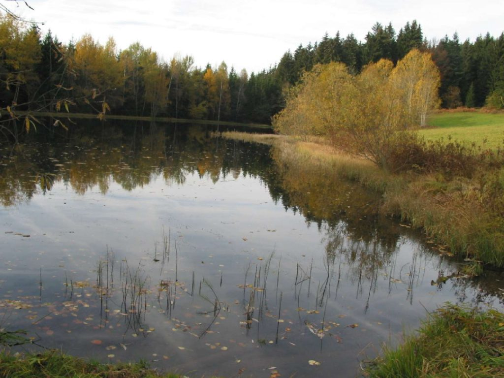 Fischotter-Lebensraum © Wildland-Stiftung Bayern