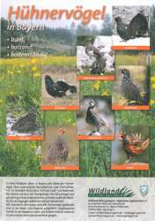 Poster_Hühnervögel_H250