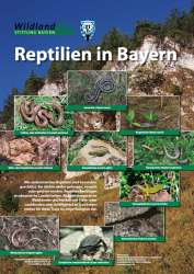 Poster_Reptilien