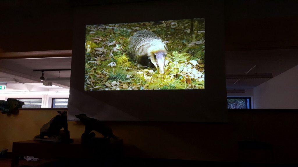 Der Kurzfilm erläutert die Lebensweise des Dachses.